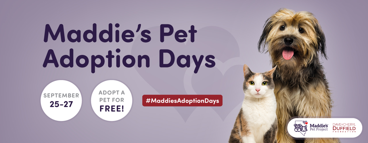 Adopt with Maddies